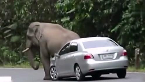大象怒怼马路上汽车,一脚踹坏保险杠,司机:我招谁了
