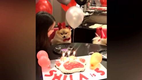 温馨!全家人给狗狗过5岁生日 现场布置得特别隆重