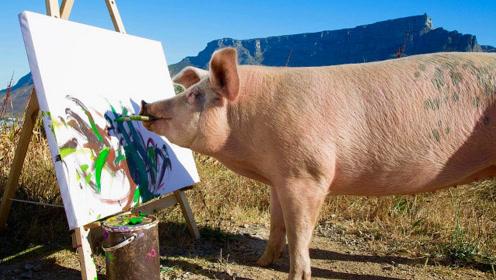 真是活久见,猪居然会画画,一副能卖1万5!