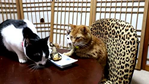 主人刚把鱼端上桌,大黑猫就开始使阴招吃独食,智商逆天