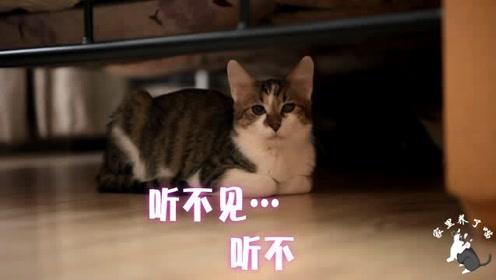 因为眼睛,猫咪和主人关系紧张。主人:你乖乖过来,不要逼我抓你
