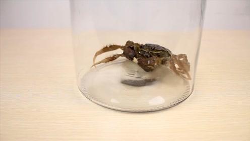 大闸蟹在真空中待5分钟,会有什么反应?这结果没想到