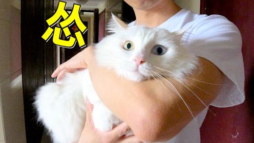 肥宅猫首次出门训练,怂得缩成了一团棉花糖