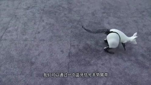 外形像袋鼠的机器人,竟和袋鼠一样弹跳,还有什么用呢?