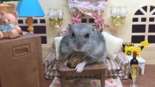 小仓鼠一天到晚就知道吃,身体已经严重走样!