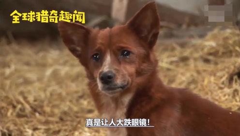从小和牛生活在一起,当牛被牵走,狗狗泪流满面,结局让人感动!