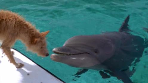 跨越种族的爱情,狗狗每天在海边观望,只为等待海豚的出现!