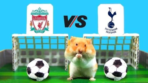 小仓鼠为国争光踢足球,比赛太激烈了,仓鼠的反应情憋住别笑