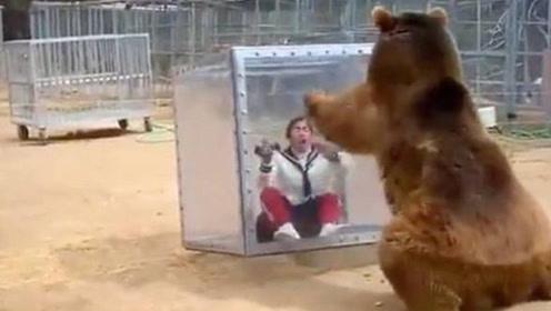 为了拍摄棕熊,女子把自己关进玻璃箱,下一秒逃都来不及了!