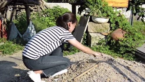 农村小妹为做美食,土里挖鸡蛋,树上摘牛奶,网友:这是高手!