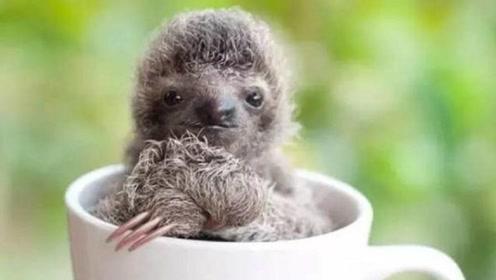 这是一种很可爱的动物,过不久或将灭绝,这是为什么?