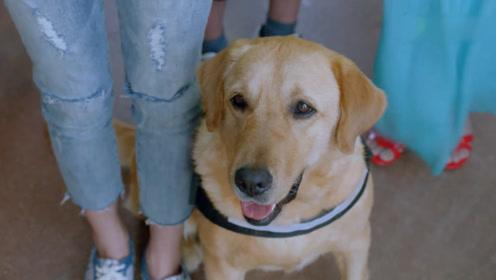 前方高能《神犬小七3》终于开播,剧情超燃,这届搜救犬也太飒了
