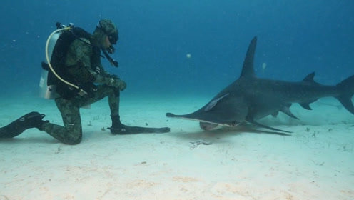 """男子发明""""水下隐身服"""",穿上它在海里潜水,连鲨鱼都看不见你!"""