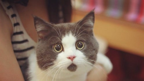 猫很高冷 然而这群猫却例外 像牛皮糖一样粘人