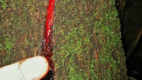 """世界上最诡异的""""树""""!砍一刀就会流血,看完都不淡定了"""