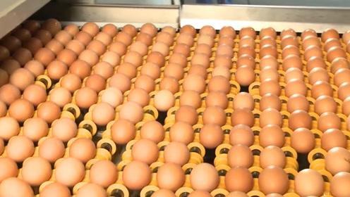 超市鸡蛋都是母鸡下的?实拍鸡蛋加工全过程,不敢相信自己眼睛!