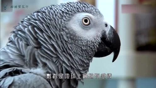 动物真挚的感情,老人垂危时向一起生活了25年的鹦鹉告别,感人