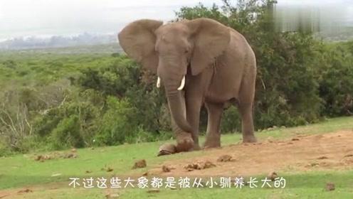 大象与野牛狭路相逢,结局出人意料,网友:这是咋回事?