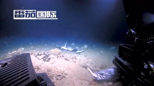 水手拍下深海奇景,石斑鱼一口吞掉一条鲨鱼