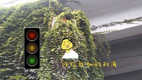 """有点皮!路口红绿灯也凹造型,被爬山虎添""""刘海"""""""