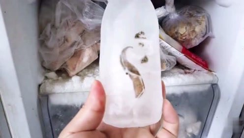 都说蚂蟥生命力顽强,放进冰箱里冷冻24小时,拿出来还能活吗?