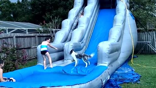 狗狗怕不敢玩滑梯,在小朋友的鼓励下,终于跳了下来