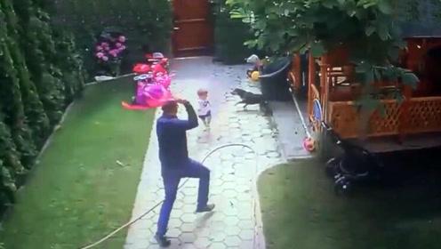 宝宝被恶犬攻击,厉害老爸一脚踹飞恶犬,监控拍下爸爸英雄瞬间