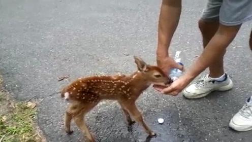 男子碰到一只小鹿,给它喝了点水后,小鹿竟然表达感谢