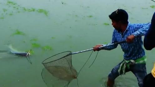 钓到一条大鱼,瞧准机会瞬间就抄进了网