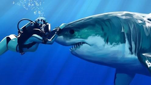 美女深海挑战与鲨鱼共舞,不料发生意外,摄像机拍下惊险一幕!