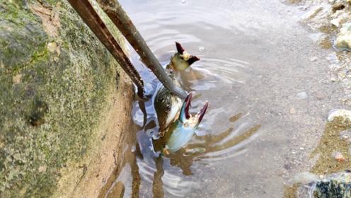 趁台风还没到,虎子连忙到海边赶海,小的螃蟹都放了