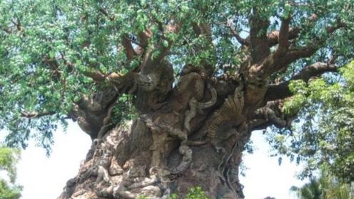一棵树能养活3代人,果实比面包还好吃,非洲人们就靠它生活