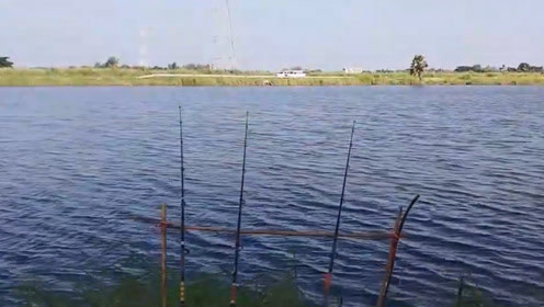 大叔和小伙到江边各放下几根钓竿,这边刚收获一条那边钓竿又拉动