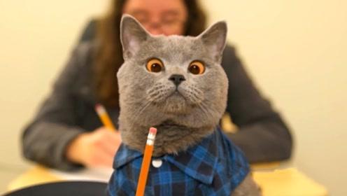 猫咪获得特殊仪器,可以操控人的身体,没想到实验对象竟是主人!