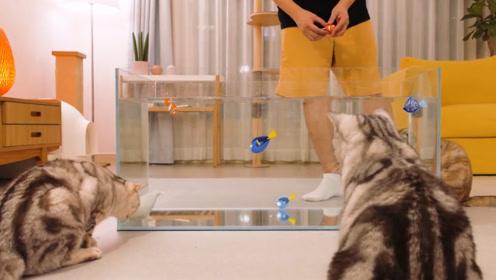 在玻璃缸里放上玩具小鱼,小猫咪会有什么反应呢?