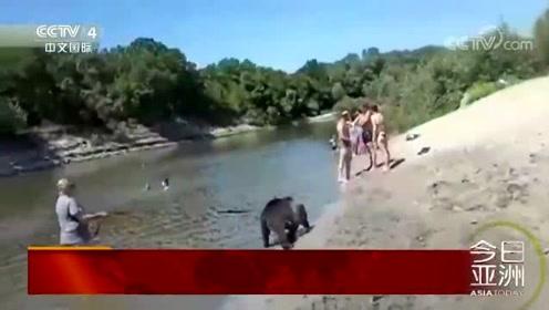 罕见!戏水玩闹 俄小熊浴场与人同乐