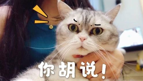 铲屎官拍视频给网友介绍主子性格,不料摄制现场频频被猫咪打脸