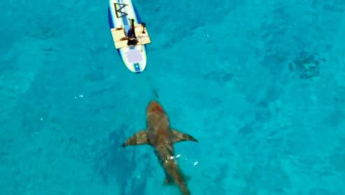 """鲨鱼会被血腥味吸引吗?小伙用""""鲜血""""测试,场面瞬间失控!"""
