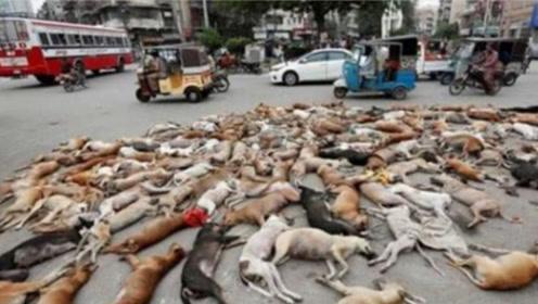 """上千具狗尸躺在马路上,杀狗变成""""正义"""",路人全部拍手叫好"""