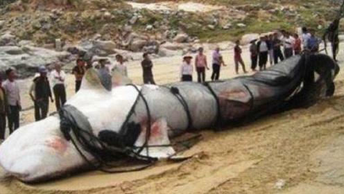新疆湖泊再现水怪!牛羊总被拖下水,花30天把水抽干后村民傻眼