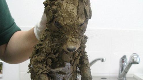 男子泥坑里救出一只小狗,洗干净后吓一跳:这不坑人吗?