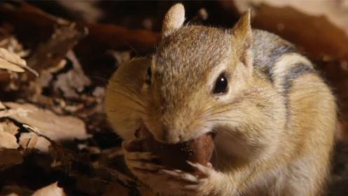 松鼠洞里是什么样的?摄影师观察了几个月,发现了神奇的一幕
