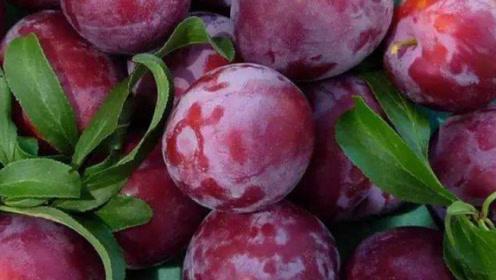这3种水果虽然贵,但不要省,孩子常吃个头长得快,大脑更聪明