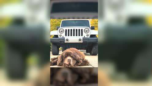 狗粮带足,油箱加满,和Jeep与萌宠一起来一场说走就走的旅行