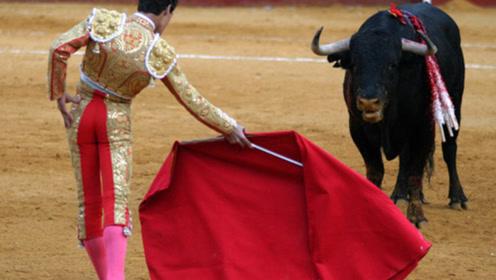 为什么斗牛时要用红色的布,绿色的布不行吗?真相让人哭笑不得!