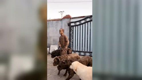 出门遛狗不能遛太多 一不小心掉进了沟里