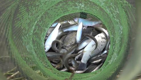 钓鱼:雨后的野河,居然有这么多鱼,早点过来就好了!
