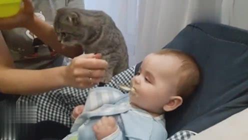 猫咪想吃小主人的口粮,网友:趁孩子没长大赶紧吃!