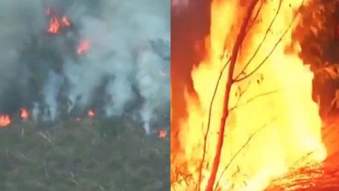 现场航拍视频曝光!亚马孙森林大火以每分钟三个足球场的速度燃烧