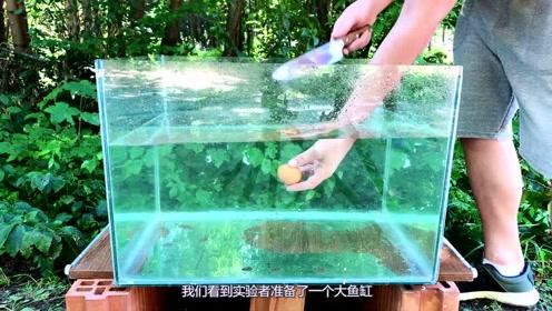 当把蛋黄放进装满水的容器中时,竟会发生如此奇妙的事!